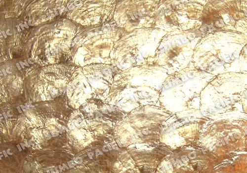 Buy CapizPpearl Shell Tiles