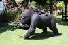 Buy Female Gorilla with Baby