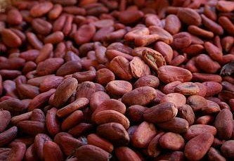 Buy Fermented Cacao Beans