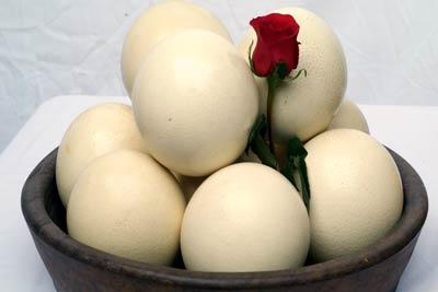 Buy Ostrich Eggs