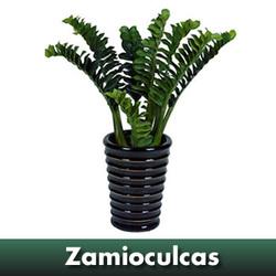 Buy Artificial Potted Flowers Zamiya