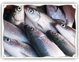 Buy Milkfish Chanos Chanos