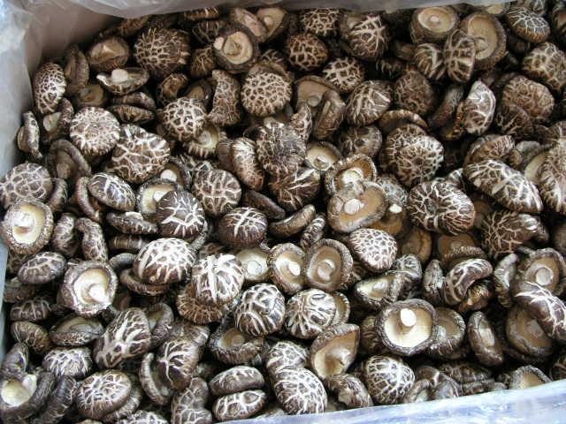 Buy Fine Dried Mushrooms