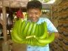 Buy Green Cavendish Banana