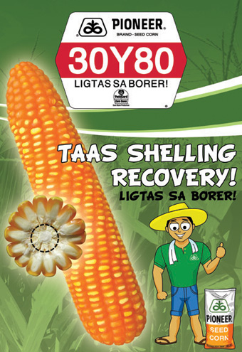 30Y80 Hybrid Corn Seeds