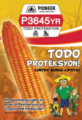 P3645YR Hybrid Corn