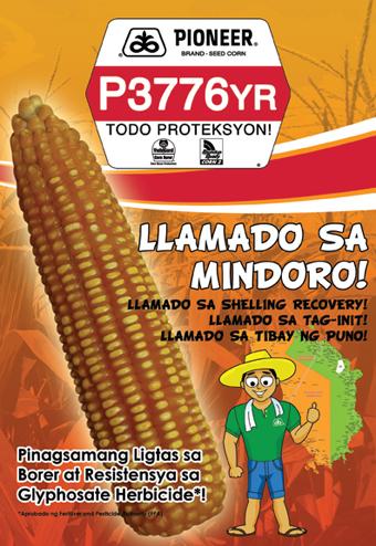 P3776YR Hybrid Corn