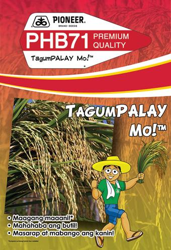 PHB71 Hybrid Rice