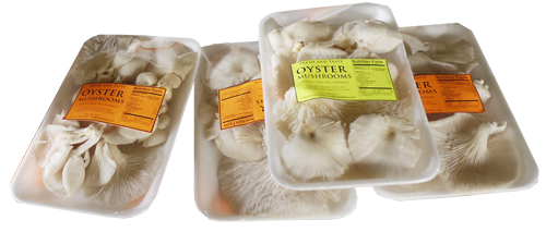 Buy Fresh Oyster Mushroom