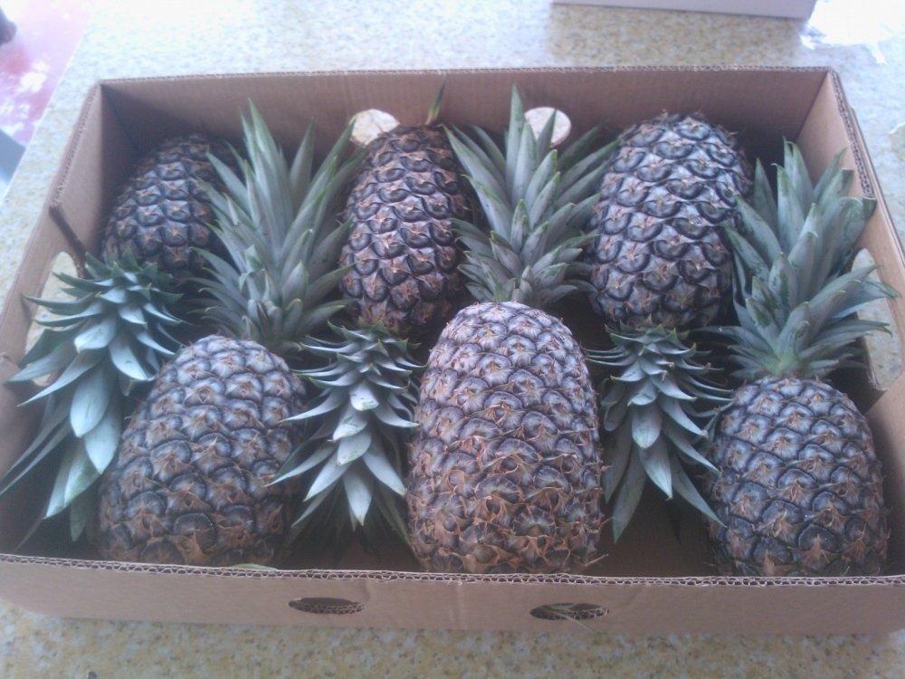 Buy Pineapples