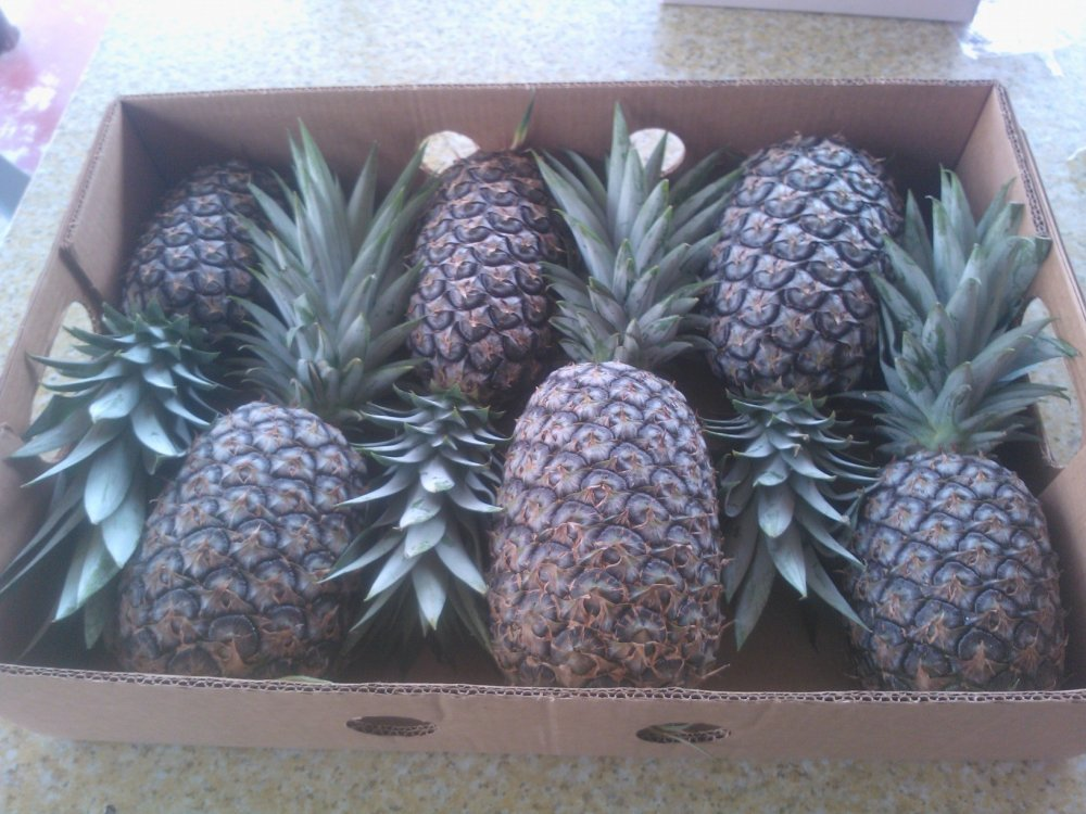 Buy Pineapples