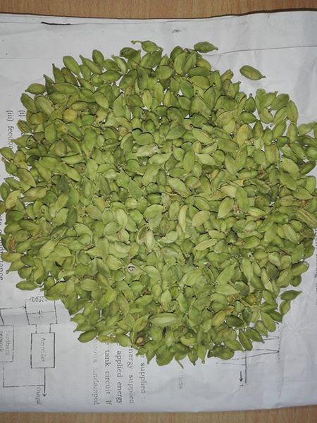 Buy Organic Green Cardamom