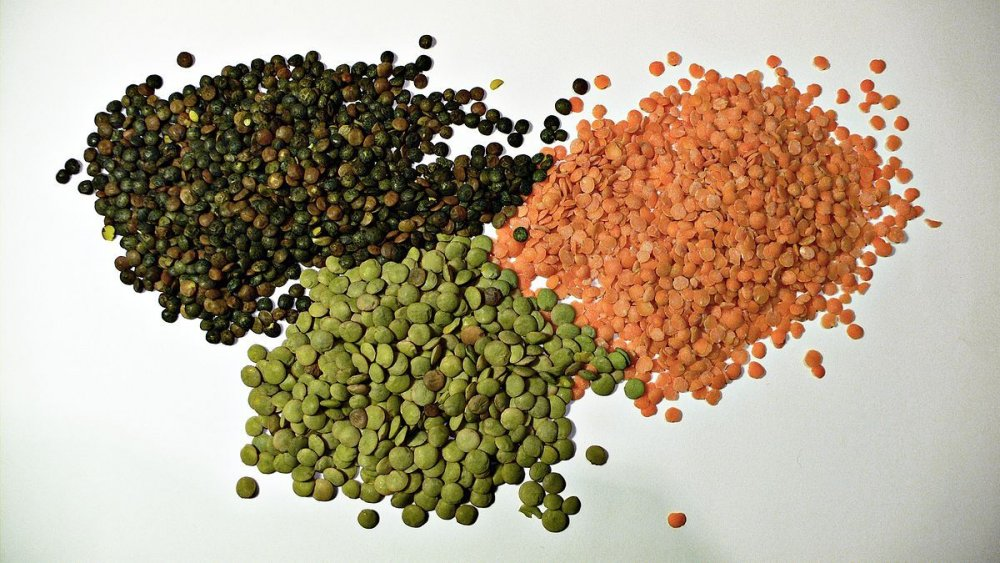 Buy Wholesale new crop organic lentils market price