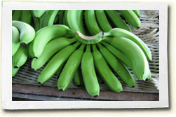 Buy Fresh Cavendish Bananas