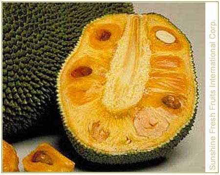 Buy Jackfruit Fresh