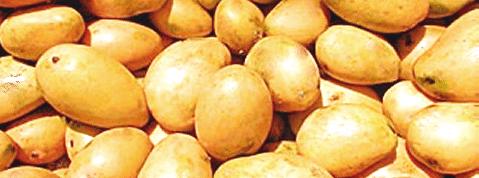 Buy Mango Fresh Naturale