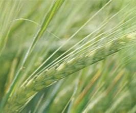 Buy Crop Nutrition Zagro