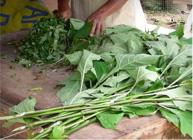 Buy Vegetables Organic