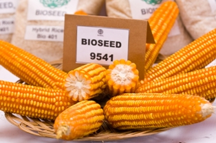 Buy Corn seeds Elite BIO 9541