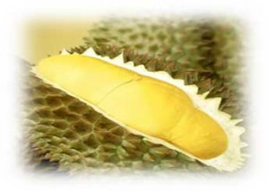Buy Tropical Fruit Durian