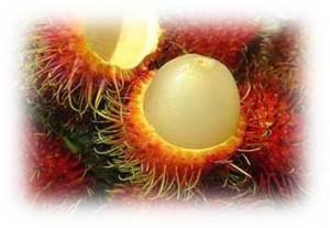 Buy Fresh Seafood Rambutan