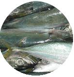 Buy Frozen Fish Sea
