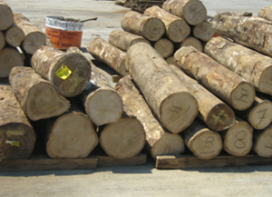Logs For Lumber And Veneers Gmelina Buy In Mandaue