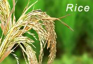 Buy Bio-Fertilizers