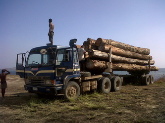 Buy Tropical Timber Export Product Array