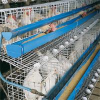 Buy Chicken Feeder & Water Trough