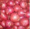 Fresh Onions Napiform