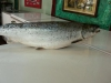 Norwagian Black Salmon / Atlantic Salmon