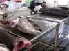 Tuna Yellow Fin Headless