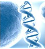 Umbilical Cord and Embryonic Stem Cell Treatment