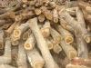Teak Wood From Ghana