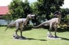 Allosaurus  6ft
