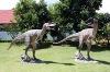 Allosaurus  6ft