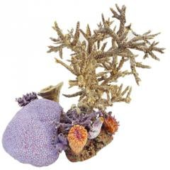 Coral Art Collection
