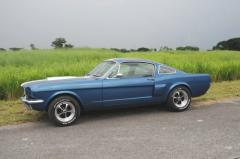 1966 Fastbacks Mustang car