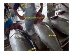 Price update for Export of Class A Tuna (Sashimi