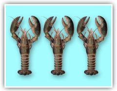 Lobster Nephropidae