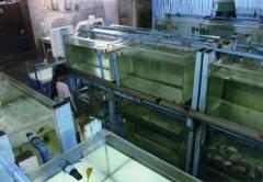 Glass Aquariums made to order