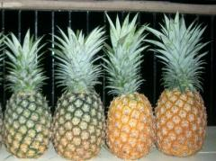 Popular Fruit Pineapples