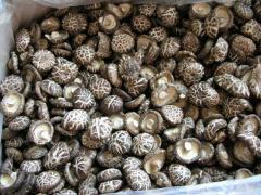 Fine Dried Mushrooms