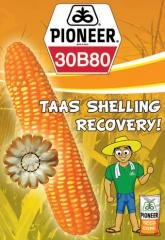 30B80 Hybrid Corn Seeds