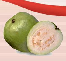Guava Purée