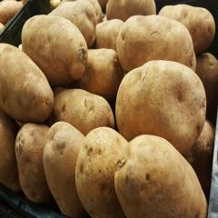 Fresh Round Irish Potatoes for sale in bulk