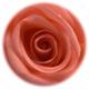 Rose color pink