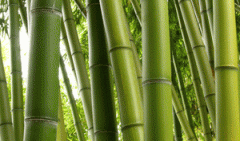 Veneer from natural bamboo.
