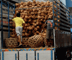 Veneer from coconut palms.